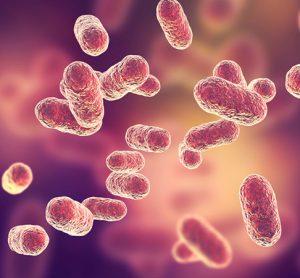 Pink bacteria