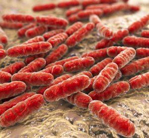 bacteria aggregation image