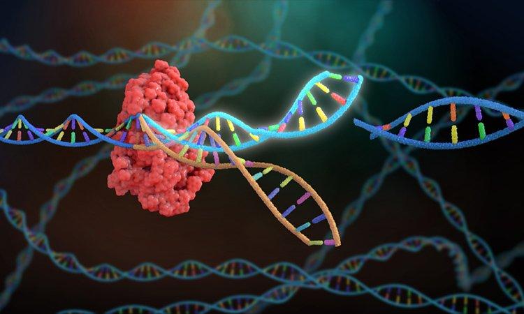 CRISPR-Cas9 on CHO cells