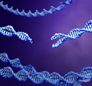 blue strands of DNA, central one with double-stranded cut, on a purple gradient background - idea of CRISPR genome editing