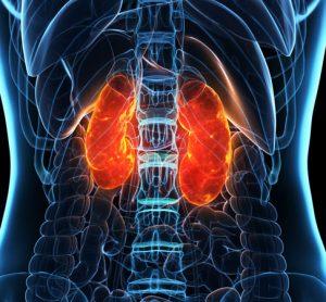 Molecule of blood found to be effective against autoimmune kidney disease
