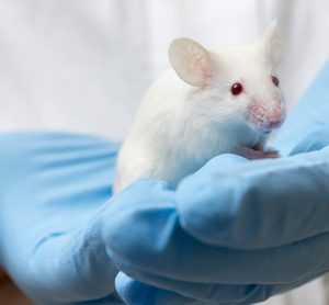 Mouse in lab with cancer