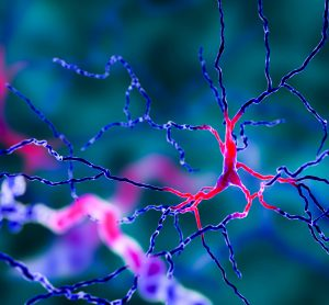 Computer recreation of dopaminergic neurons (involved in Parkinson's) in blue and pink