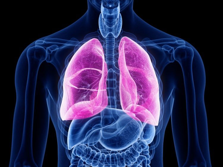 Human torso outlined in blue with lungs highlighted in pink - idea of pulmonary diseases, like lung fibrosis