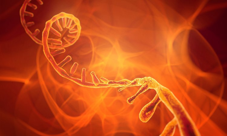 RNA and synthetic biology