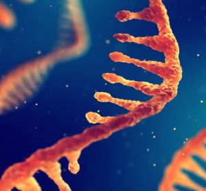 RNA strands in orange on a blue background