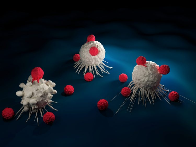 Red blobs (indicating T cells) surrounding and touching larger white blobs (acting as cancer cells) - idea of T cell therapy for cancer
