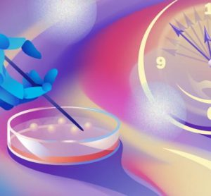 robotic hand pipetting from petri dish of organoids next to a clock - idea of automation speeding up organoid development [Credit: Daria Sokol/MIPT Press Office].