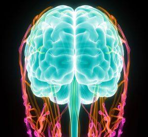 brain lymph vessels MS