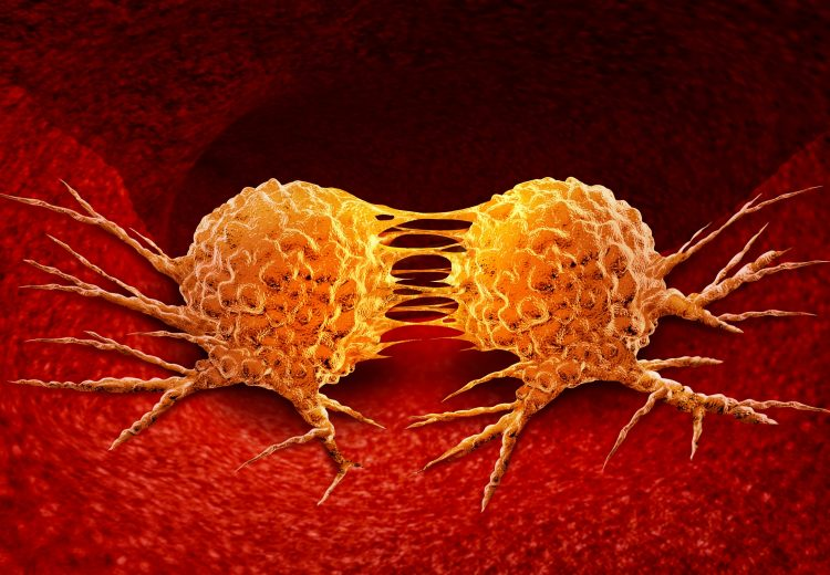 orange cancer cells dividing in red tissue