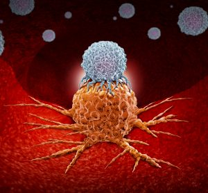 white blob representing a Natural Killer T cell attaching an orange cancer cell on a red tissue-like background