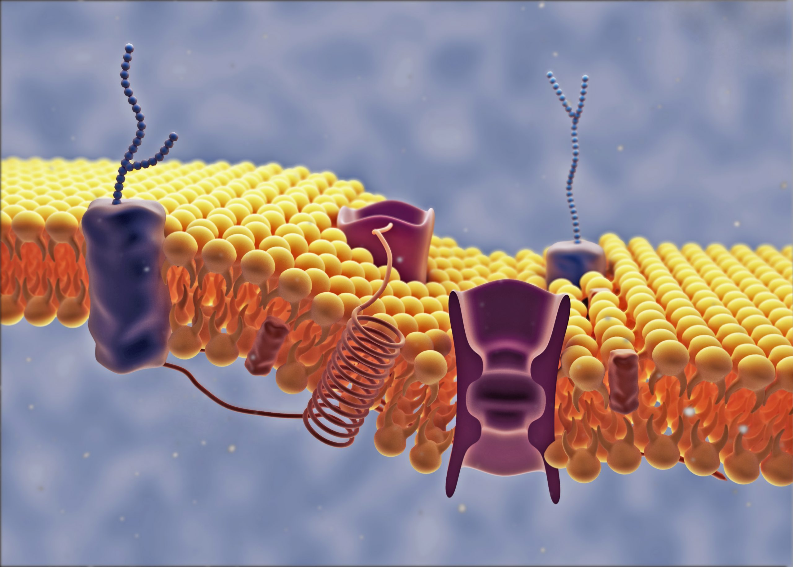 computer model of a cell membrane lipid bilayer with receptors, proteins and carbohydrates