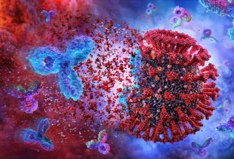 coronavirus being destroyed by antibody