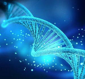 RUNX proteins