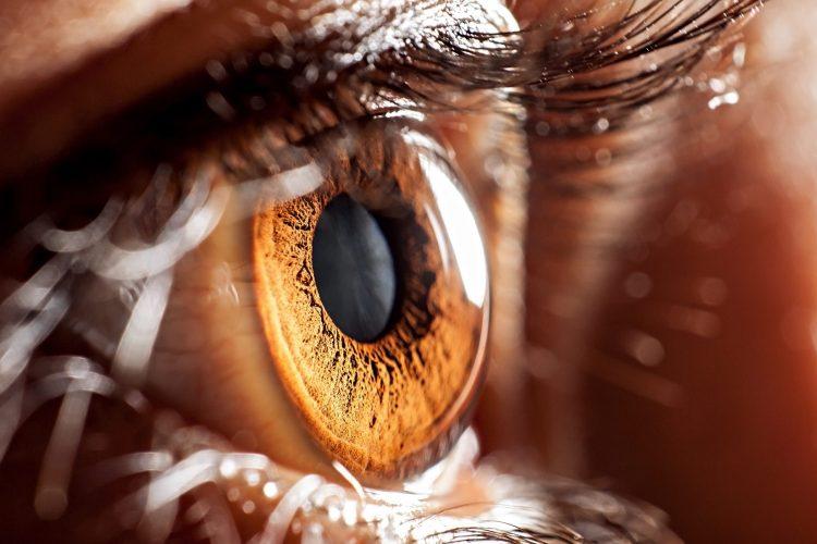 brown eye up close