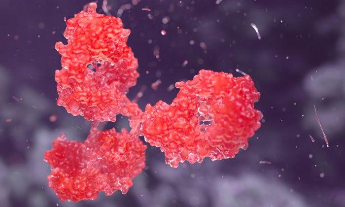 feature-image-antibody