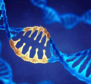 cardiometabolic disease gene mutation