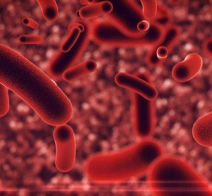 Genetically engineered bacteria