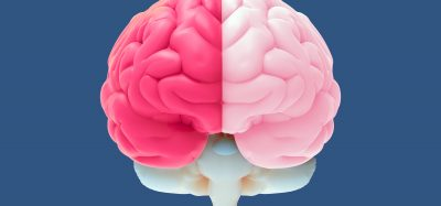 view of a human brain, left side bright pink, right side pastel pink, from the front - idea of neuroscience research
