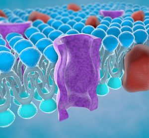 cartoon of the cross-section of a purple ion channel in a blue lipid bylayer (plasma mebrane)