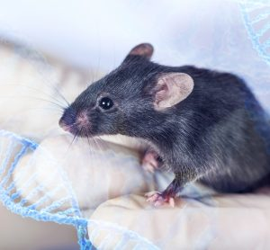 mouse perched on researcher's gloved hands
