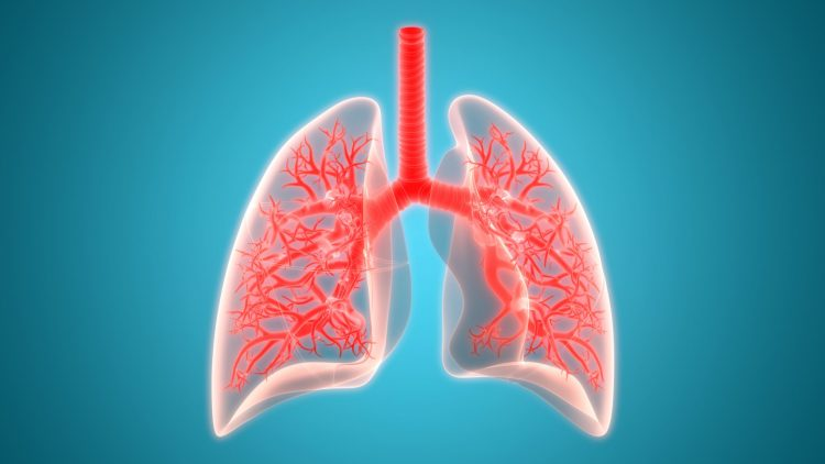 Lungs in red on a bright blue background
