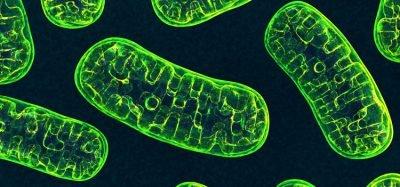 green mitochondria on a dark blue background