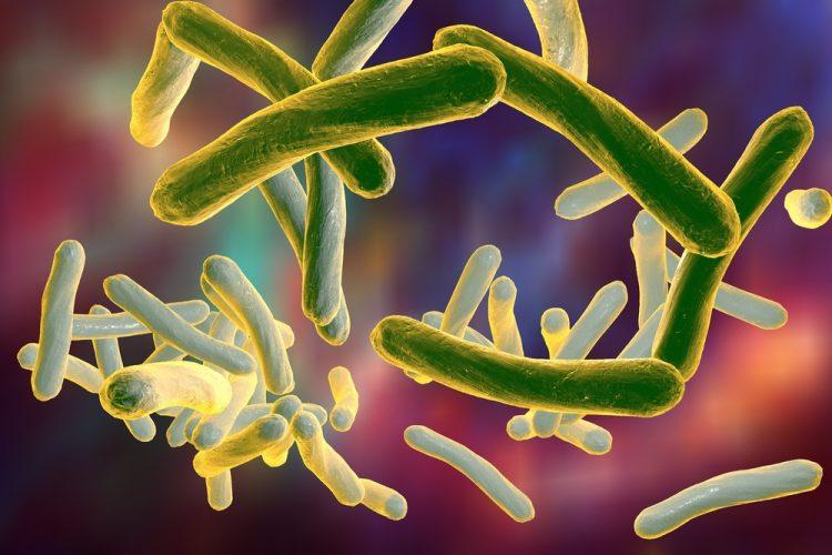 tuberculosis bacteria - long thin gerkin-like structures