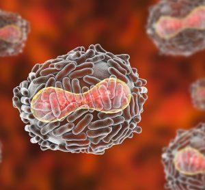 variola poxviruses which cause human smallpox