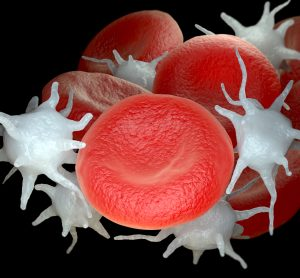 red blood cells and platelets mixed together