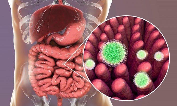 rotavirus depiction image