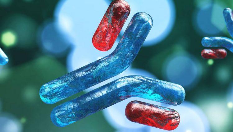 Antibody - mAb
