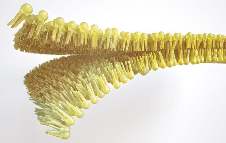Lipids - lipid layer