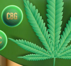 CBC and CBG nest to cannabis leaf