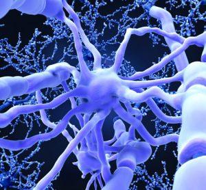 Myelin sheaths in the brain