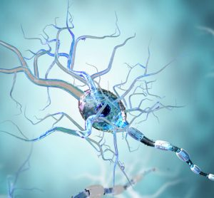 Protective responses appear weaker in neural stem cells from Huntington disease patients