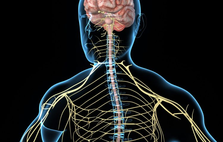 Central nervous system and COVID-19