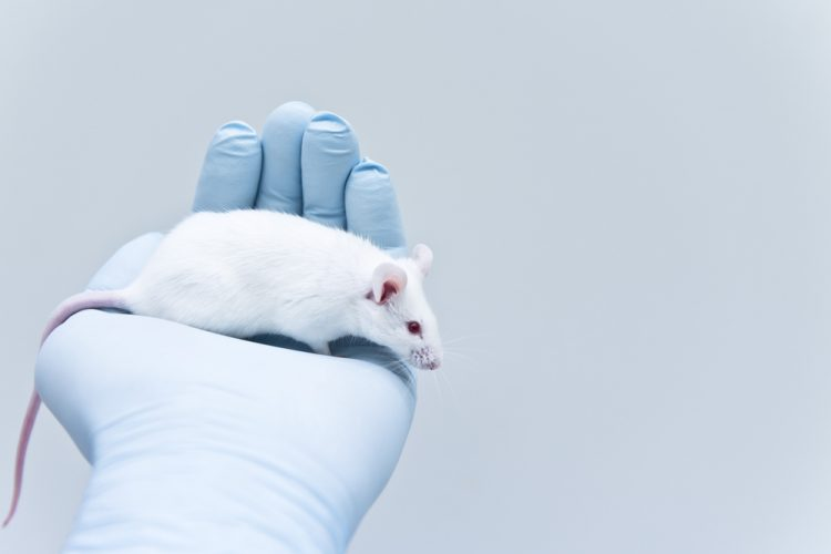 Mouse in lab - Translating novel drug success in animals to humans