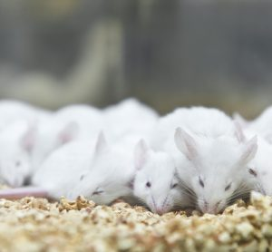 mice are social