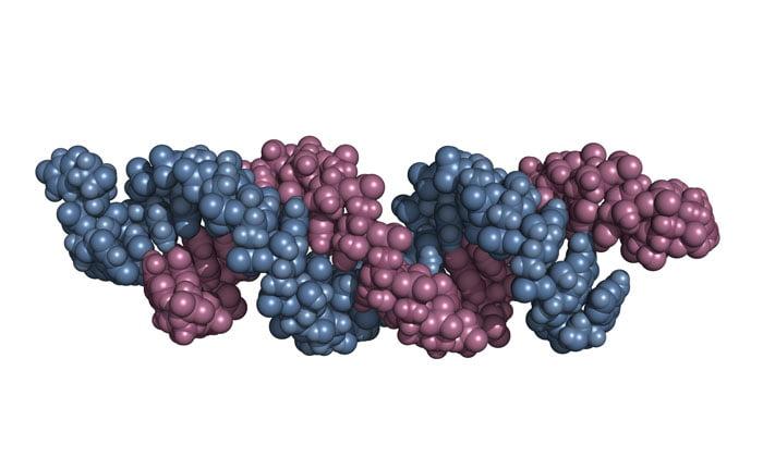 piRNAs-defend-the-genome