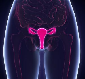 3D artist representation of female reproductive system